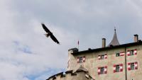 Burg Hohenwerfen - Greifvogelschau